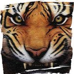 RMS Tigers