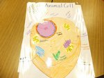 View Animal Cell