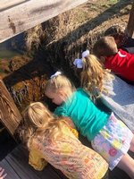 Miss Stapleton`s Southland Academy K3 students lie on the bridge intently looking down into Raider Creek for tadpoles.
