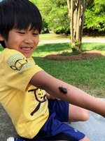 Leo Remollino, Southland Academy K5 student, feels a little tickle from the beetle he found on his adventure walk.