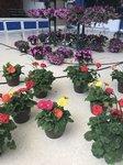 View Plant Sale