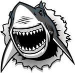 Go Sharks!