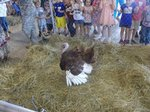 View 2014 EES Kinder Kids at Petting Zoo