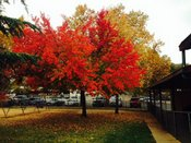 Our beautiful Fall colors!
